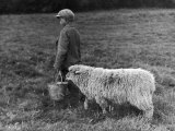 Little Boy Carring a Metal Pail of Feed is Followed by a Hungry Sheep!