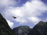 A Condor Flying Through the Mountains