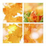 Autumn Maple Leaves Four Patch