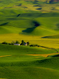 Rolling Green Hills of Spring Crops  Palouse  Washington  USA