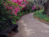 Pathway and Bench in Magnolia Plantation and Gardens  Charleston  South Carolina  USA