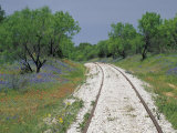 Bluebonnets and Abandoned Rails  near Marble Falls  Texas  USA