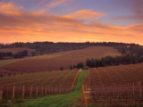 Early Spring over Knutsen Vineyards in Red Hills  Oregon  USA