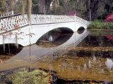 Long White Bridge over Pond  Magnolia Plantation and Gardens  Charleston  South Carolina  USA