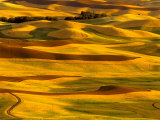 Harvest Time Fields  Palouse  Washington  USA
