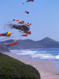 Kites Flying on the Oregon Coast  USA