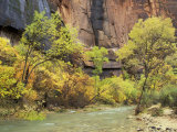 Virgin River in the Upper Zion Region  Zion National Park  Utah  USA