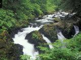 Sol Duc Falls  Olympic Rainforest  Olympic National Park  Washington  USA