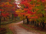 Country Road in the Fall  Vermont  USA