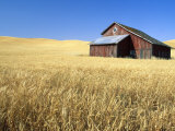 Old Barn in Wheatfield near Harvest Time  Whitman County  Washington  USA