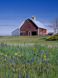 Old Red Barn with Spring Wildflowers  Grangeville  Idaho  USA