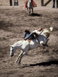 Rodeo  Truckee  California  USA