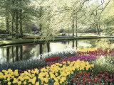 Keukenhof Gardens  Lissa  Netherlands