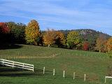 Horse Farm in New England  New Hampshire  USA