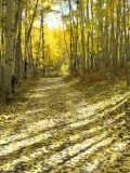 Aspen  Dirt Road  Kebler Pass  Colorado  USA
