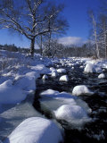 Wildcat River  White Mountains  New Hampshire  USA