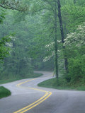 Forest Road in Spring  Daniel Boone National Forest  Kentucky  USA