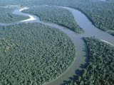 Amazon River  Amazon Jungle  Brazil