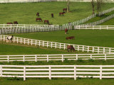 Thoroughbred Horses  Kentucky Horse Park  Lexington  Kentucky  USA
