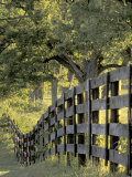 Fence at Sunrise  Bluegrass Region  Lexington  Kentucky  USA