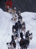 Dog Sled Racing in the 1991 Iditarod Sled Race  Alaska  USA