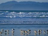 Pismo Beach  California  USA