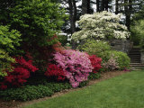 Azaleas  New Jersey State Botanical Garden  New Jersey  USA