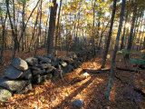 Stone Wall  Nature Conservancy Land Along Crommett Creek  New Hampshire  USA