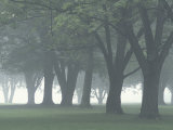 Trees in Fog  Louisville  Kentucky  USA