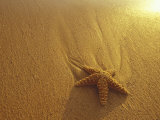 Starfish and Sand at Sunset  Maui  Hawaii  USA