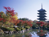 Autumn Leaves and Five-Story Pagoda  Toji Temple (Kyo-O-Gokoku-Ji)  Kyoto  Honshu  Japan