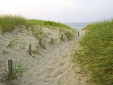 Path at Head of the Meadow Beach  Cape Cod National Seashore  Massachusetts  USA