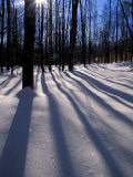 Snow in the Northern Hardwood Forest  Maine  USA