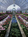 Como Park Conservatory  St Paul  Minnesota  USA