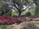 Orton Plantation Gardens  North Carolina  USA