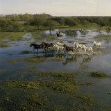 Herding Horses  Argentina