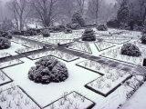 Dumbarton Oaks Garden  Washington Dc  USA