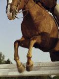 Jockey And a Horse Jumping Over a Hurdle