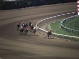 Nine Race Horses