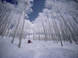 Skiing Through the Trees