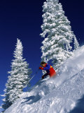 Skier with Snow Covered Trees