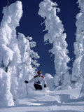 Skier with Snow-covered Trees