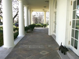 President Bush's Scottish Terrier Miss Beazley Plays on the Colonnade