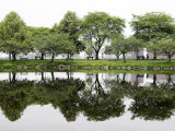 Trees are Reflected in Still Water on the Esplanade Along the Charles River in Boston