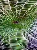 A Banana Spider's Web