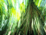 Stilt Root of a Walking Palm  Borro Colorado Island  Panama