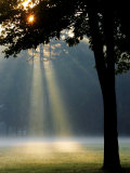 Shafts of Sunlight Illuminate a Fog-Shrouded Meadow