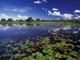 Waterways in Pantanal  Brazil