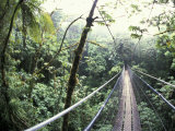 Sky Walk  Monteverde Cloud Forest  Costa Rica