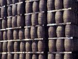 Bacardi Rum Ages in Oak Barrels  San Juan  Puerto Rico